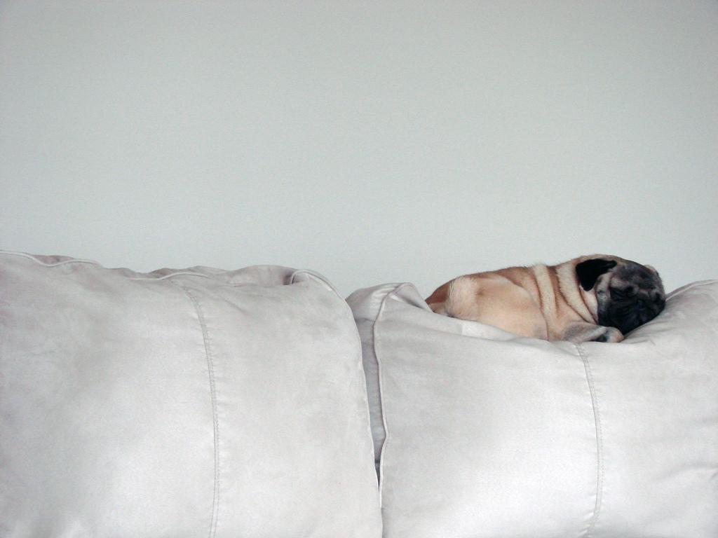 so macht couching richtig spa mode online bestellen. Black Bedroom Furniture Sets. Home Design Ideas
